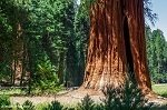Sequoia / Kings Canyon bezoeken