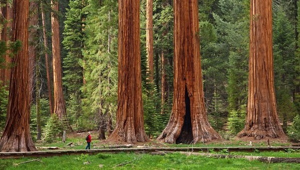Sequoia Kings Canyon