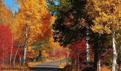 Moose-Wilson Road